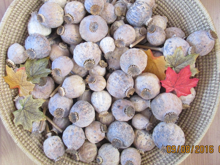 Buy one pound dried poppy pods online mightylinksfo Image collections